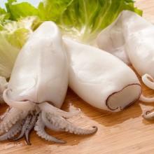 Calamari food and drink photography